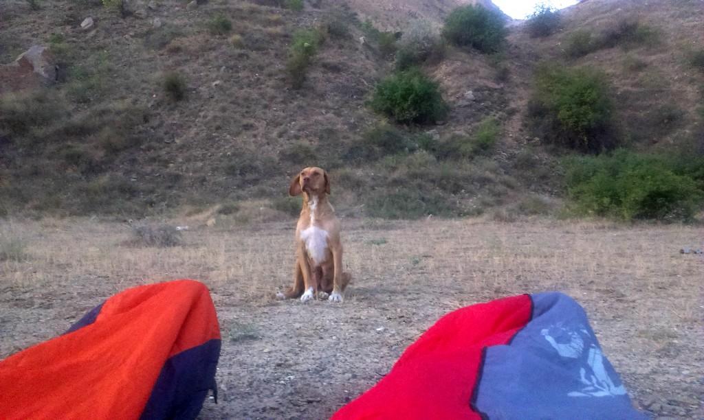 Strážny pes (nechá sa strážiť)